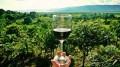 開催予告[1月]イタリア・ワインセミナー ②